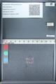 http://mczbase.mcz.harvard.edu/specimen_images/ent-lepidoptera/images/2012_01_09/IMG_110087.JPG