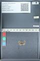 http://mczbase.mcz.harvard.edu/specimen_images/ent-lepidoptera/images/2012_01_09/IMG_110091.JPG
