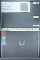 http://mczbase.mcz.harvard.edu/specimen_images/ent-lepidoptera/images/2012_01_09/IMG_110098.JPG