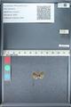 http://mczbase.mcz.harvard.edu/specimen_images/ent-lepidoptera/images/2012_01_09/IMG_110101.JPG