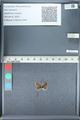 http://mczbase.mcz.harvard.edu/specimen_images/ent-lepidoptera/images/2012_01_09/IMG_110103.JPG