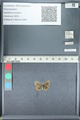 http://mczbase.mcz.harvard.edu/specimen_images/ent-lepidoptera/images/2012_01_09/IMG_110110.JPG