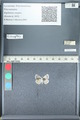 http://mczbase.mcz.harvard.edu/specimen_images/ent-lepidoptera/images/2012_01_09/IMG_110113.JPG