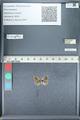 http://mczbase.mcz.harvard.edu/specimen_images/ent-lepidoptera/images/2012_01_09/IMG_110119.JPG