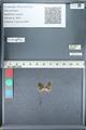 http://mczbase.mcz.harvard.edu/specimen_images/ent-lepidoptera/images/2012_01_09/IMG_110121.JPG