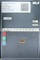 http://mczbase.mcz.harvard.edu/specimen_images/ent-lepidoptera/images/2012_01_09/IMG_110122.JPG