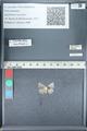 http://mczbase.mcz.harvard.edu/specimen_images/ent-lepidoptera/images/2012_01_09/IMG_110128.JPG