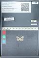 http://mczbase.mcz.harvard.edu/specimen_images/ent-lepidoptera/images/2012_01_09/IMG_110131.JPG