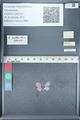 http://mczbase.mcz.harvard.edu/specimen_images/ent-lepidoptera/images/2012_01_09/IMG_110138.JPG