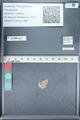 http://mczbase.mcz.harvard.edu/specimen_images/ent-lepidoptera/images/2012_01_09/IMG_110141.JPG