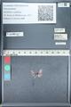 http://mczbase.mcz.harvard.edu/specimen_images/ent-lepidoptera/images/2012_01_09/IMG_110144.JPG