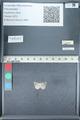 http://mczbase.mcz.harvard.edu/specimen_images/ent-lepidoptera/images/2012_01_09/IMG_110147.JPG
