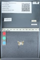 http://mczbase.mcz.harvard.edu/specimen_images/ent-lepidoptera/images/2012_01_09/IMG_110151.JPG