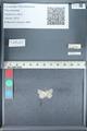 http://mczbase.mcz.harvard.edu/specimen_images/ent-lepidoptera/images/2012_01_09/IMG_110153.JPG