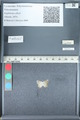 http://mczbase.mcz.harvard.edu/specimen_images/ent-lepidoptera/images/2012_01_09/IMG_110154.JPG