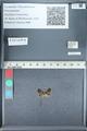 http://mczbase.mcz.harvard.edu/specimen_images/ent-lepidoptera/images/2012_01_09/IMG_110157.JPG