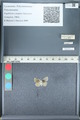 http://mczbase.mcz.harvard.edu/specimen_images/ent-lepidoptera/images/2012_01_09/IMG_110160.JPG