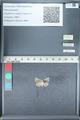 http://mczbase.mcz.harvard.edu/specimen_images/ent-lepidoptera/images/2012_01_09/IMG_110184.JPG