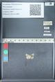 http://mczbase.mcz.harvard.edu/specimen_images/ent-lepidoptera/images/2012_01_09/IMG_110192.JPG