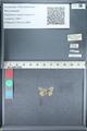 http://mczbase.mcz.harvard.edu/specimen_images/ent-lepidoptera/images/2012_01_09/IMG_110193.JPG