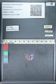 http://mczbase.mcz.harvard.edu/specimen_images/ent-lepidoptera/images/2012_01_09/IMG_110201.JPG