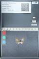 http://mczbase.mcz.harvard.edu/specimen_images/ent-lepidoptera/images/2012_01_09/IMG_110203.JPG