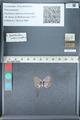http://mczbase.mcz.harvard.edu/specimen_images/ent-lepidoptera/images/2012_01_09/IMG_110206.JPG