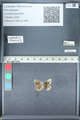 http://mczbase.mcz.harvard.edu/specimen_images/ent-lepidoptera/images/2012_01_09/IMG_110227.JPG