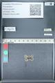 http://mczbase.mcz.harvard.edu/specimen_images/ent-lepidoptera/images/2012_01_09/IMG_110264.JPG