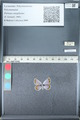 http://mczbase.mcz.harvard.edu/specimen_images/ent-lepidoptera/images/2012_01_23/IMG_110641.JPG