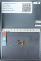 http://mczbase.mcz.harvard.edu/specimen_images/ent-lepidoptera/images/2012_01_28/IMG_110930.JPG