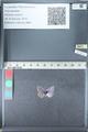 http://mczbase.mcz.harvard.edu/specimen_images/ent-lepidoptera/images/2012_01_28/IMG_110952.JPG