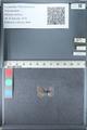 http://mczbase.mcz.harvard.edu/specimen_images/ent-lepidoptera/images/2012_01_28/IMG_110953.JPG