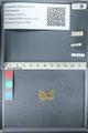 http://mczbase.mcz.harvard.edu/specimen_images/ent-lepidoptera/images/2012_02_01/IMG_111294.JPG
