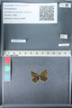 http://mczbase.mcz.harvard.edu/specimen_images/ent-lepidoptera/images/2012_02_01/IMG_111356.JPG