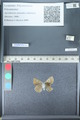 http://mczbase.mcz.harvard.edu/specimen_images/ent-lepidoptera/images/2012_02_01/IMG_111358.JPG
