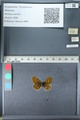 http://mczbase.mcz.harvard.edu/specimen_images/ent-lepidoptera/images/2012_02_04/IMG_111561.JPG