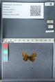 http://mczbase.mcz.harvard.edu/specimen_images/ent-lepidoptera/images/2012_02_04/IMG_111563.JPG