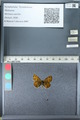 http://mczbase.mcz.harvard.edu/specimen_images/ent-lepidoptera/images/2012_02_04/IMG_111564.JPG
