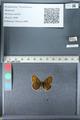 http://mczbase.mcz.harvard.edu/specimen_images/ent-lepidoptera/images/2012_02_04/IMG_111565.JPG