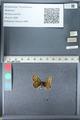 http://mczbase.mcz.harvard.edu/specimen_images/ent-lepidoptera/images/2012_02_04/IMG_111567.JPG