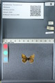 http://mczbase.mcz.harvard.edu/specimen_images/ent-lepidoptera/images/2012_02_04/IMG_111568.JPG