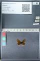 http://mczbase.mcz.harvard.edu/specimen_images/ent-lepidoptera/images/2012_02_04/IMG_111569.JPG