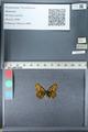 http://mczbase.mcz.harvard.edu/specimen_images/ent-lepidoptera/images/2012_02_04/IMG_111570.JPG