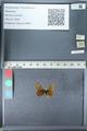 http://mczbase.mcz.harvard.edu/specimen_images/ent-lepidoptera/images/2012_02_04/IMG_111571.JPG