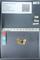 http://mczbase.mcz.harvard.edu/specimen_images/ent-lepidoptera/images/2012_02_04/IMG_111573.JPG