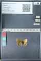 http://mczbase.mcz.harvard.edu/specimen_images/ent-lepidoptera/images/2012_02_04/IMG_111574.JPG