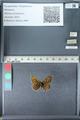 http://mczbase.mcz.harvard.edu/specimen_images/ent-lepidoptera/images/2012_02_04/IMG_111578.JPG