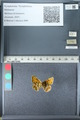 http://mczbase.mcz.harvard.edu/specimen_images/ent-lepidoptera/images/2012_02_04/IMG_111580.JPG
