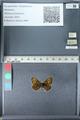 http://mczbase.mcz.harvard.edu/specimen_images/ent-lepidoptera/images/2012_02_04/IMG_111581.JPG